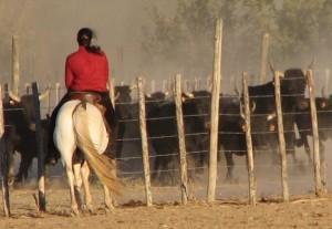 equitazione - tipi di monta: altre monte da lavoro
