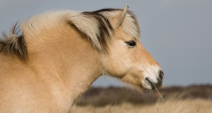 Ossido di Zinco 45% di Terra di Cuma: protezione della pelle dei cavalli