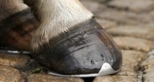 Onyx bustine, un mangime complementare per la ricrescita dello zoccolo