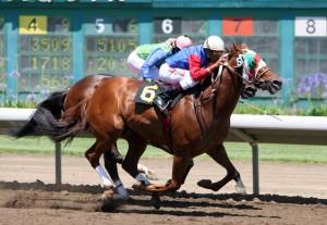 Cavalli, tipo di monta: la monta sportiva