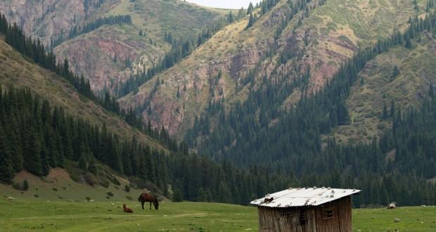 Ambiente delle Escursioni a Cavallo