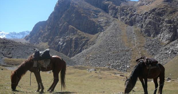 Attrezzatura per il Trekking a Cavallo