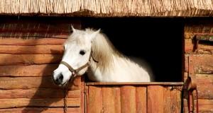 Horse Sheen: come mantenere brillanti manto e crini del cavallo