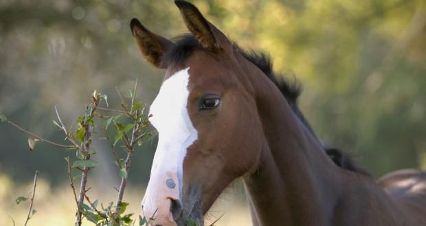 Octocardio, un supplemento alimentare molto importante per i cavalli