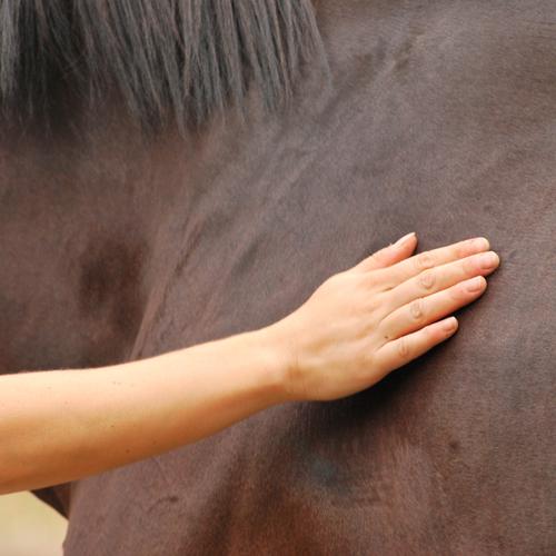 Comunicare col Cavallo