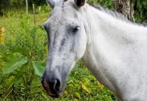consumo di cavallo nel mondo