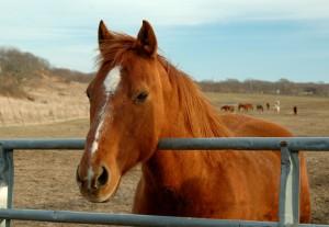 Furto di cavalli