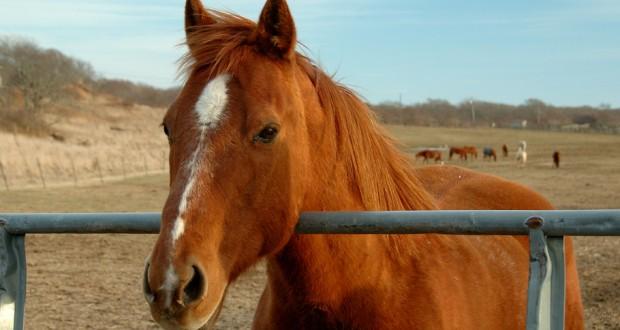 Vetrolin Slick'n'Easy, un prodotto importante per la pulizia dei cavalli
