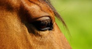 Maltrattamenti sui Cavalli