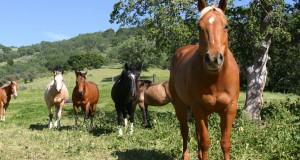 Flogestina per cavalli: un'ottima pasta defaticante e antinfiammatoria