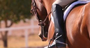Prendere Lezioni di Equitazione
