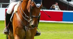 Come Comprare la Sella per il Nostro Cavallo