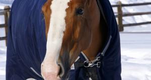 Coperte da Cavallo: Meglio Una in Più