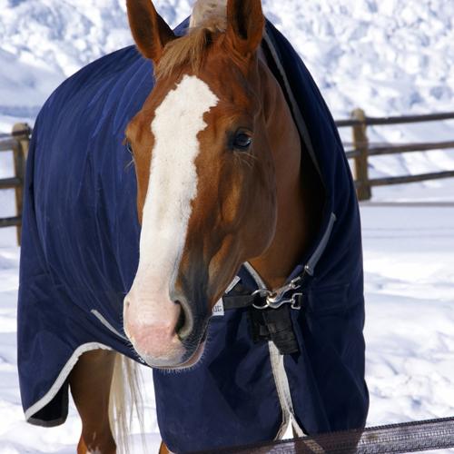 coperte_da_cavallo_meglio_una_in_piu