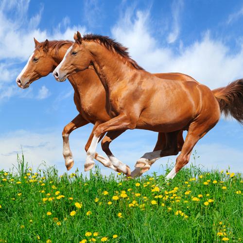 Importanza del Gioco per il Cavallo