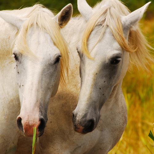 Nature's Defense, l'ideale per spazzolare e pulire il mantello del cavallo