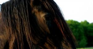 Cavallo Murgese: Storia e Caratteristiche
