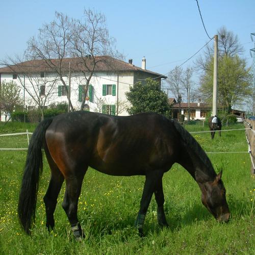 il_cavallo_maremmano