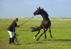 addestramento cavallo