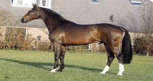 Trigger, l'ideale per il recupero aerobico dei cavalli da gara