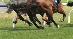 Lasi Resp, combatte i problemi derivanti da sforzi intensi nei cavalli